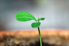 概念绿色寿命新的新芽 图库摄影