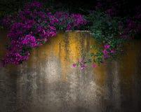 概念背景:与紫色花的分支 免版税图库摄影