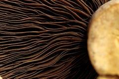 概念蘑菇系列 免版税库存图片