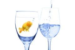 概念金鱼 免版税库存照片