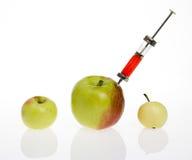 概念食物基因被修改 库存图片