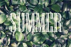概念:夏天自然,暑假,旅行 在一个白色框架的题字夏令时反对背景新鲜和 免版税图库摄影