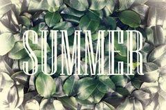 概念:夏天自然,暑假,旅行 在一个白色框架的题字夏令时反对背景新鲜和 库存图片