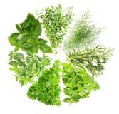 概念:草本的汇集是为调味或我使用的植物 库存照片