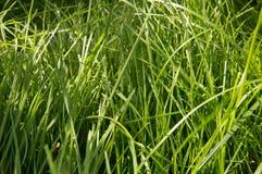 概念-世界地球日,一天和平,自然,美丽的绿草的保护 免版税库存图片