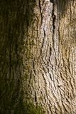 概略的树皮横向格式 库存图片