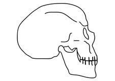 概述头骨 图库摄影
