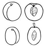 概述果子桃子和李子 皇族释放例证