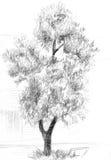 榆木 向量例证