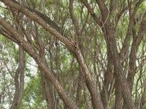 榆树树干 库存图片