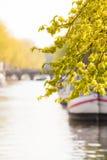 榆树的枝杈在阿姆斯特丹老镇运河的 库存照片