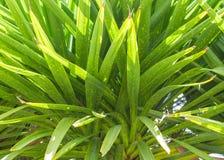 榕属树,南美洲,安地斯山 免版税库存照片