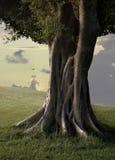 榕属iii结构树 库存照片