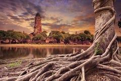 榕树古老和老塔土地scape大根  库存照片
