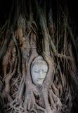 榕树长满的砂岩菩萨头 库存照片