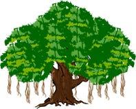 榕树 免版税图库摄影