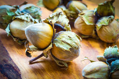 榛子使在坚硬壳的欧洲榛树坚果成群 免版税库存图片