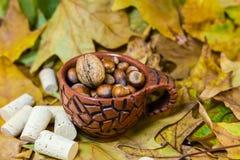 榛子在秋天 免版税库存照片
