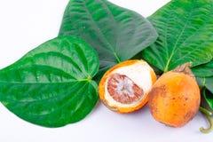 槟榔子和绿色蒋酱之叶叶子 免版税图库摄影