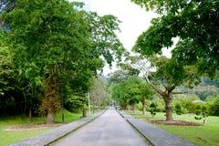 槟榔岛植物园 库存照片