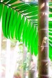 槟榔树掌上型计算机 免版税库存照片