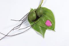 槟榔树蒋酱之叶 库存图片