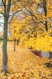 槭树一条美丽的大道在秋天与黄色叶子 免版税库存照片