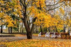 槭树一条美丽的大道在秋天与黄色叶子 免版税库存图片