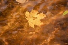 槭树下落的五颜六色的秋天叶子特写镜头在与太阳反射的水,金子中起波纹 免版税库存图片