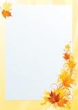 槭树信件 库存图片
