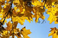 槭树公园在秋天 图库摄影