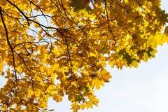 槭树公园在秋天 免版税库存照片