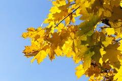 槭树公园在秋天 库存图片