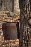 槭树加糖 免版税库存图片