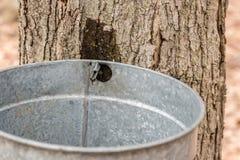 槭树加糖 库存照片