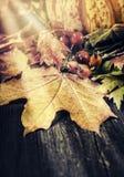 槭树叶子、狂放的臀部和南瓜在土气木背景与太阳光芒、秋天和秋天概念 免版税库存图片
