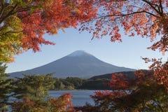 槭树叶子变成秋天颜色在Mt 富士日本mt 免版税图库摄影