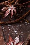 槭树叶子和藤分支静物画  库存照片