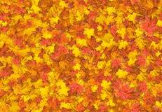 槭树叶子无接缝的纹理  库存照片