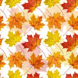 槭树叶子无缝的背景 图库摄影