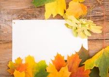 从槭树叶子的秋天框架 免版税图库摄影
