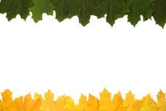 槭树叶子的背景 免版税库存照片
