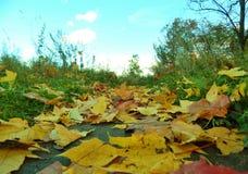 槭树叶子足迹 库存照片