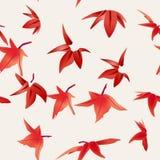 槭树叶子 图库摄影