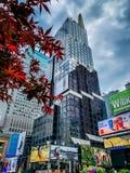 槭树和时间广场 库存图片