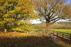 槭树和橡木在秋天 库存图片