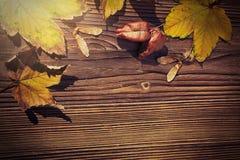 槭树和koelreuteria paniculata叶子,在木b的枫树种子 库存照片