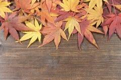 槭树在一张木桌的上部离开 免版税库存照片