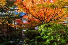 槭树在日本庭院里 免版税图库摄影