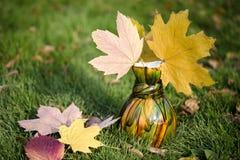 槭树在花瓶离开在绿草 免版税图库摄影